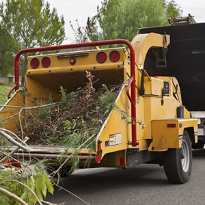 Tree Removal Service in Peru IN